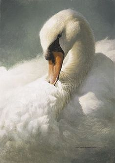 Gorgeous feathers in this Michael Dumas swan painting…