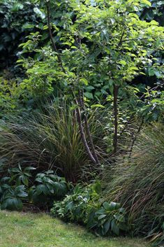 Top 10 best trees for small gardens - Living Colour Gardens