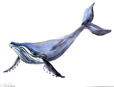 Humpback Whale original watercolor painting 9 X 12 by ORIGINALONLY, $27.00