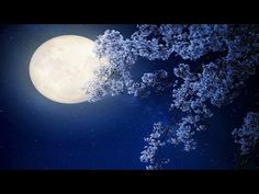 Relaxing Sleep Music: Harp Music, Sleeping, Fall Asleep, Beat Insomnia, Soft, Calm, Soothing ★59 - YouTube