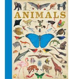 Amazon.fr - [(Animals)] [ By (author) Camilla de le Bedoyere, Designed by Susi Martin ] [September, 2014] - Camilla de le Bedoyere - Livres