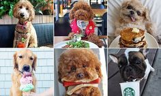 The Dogs Who Brunch Instagram is sure to be your new favourite account