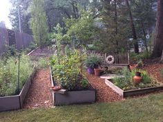 I like to call this my Mediterranean garden. Mediterranean Garden, Woodland Garden, Backyard, Plants, Yard, Backyards, Flora, Plant, Planting