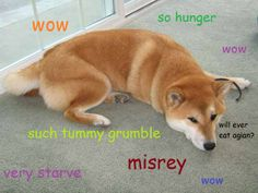 Lol. How Hadley & Ernie act 10 minutes after they eat. I love doge !