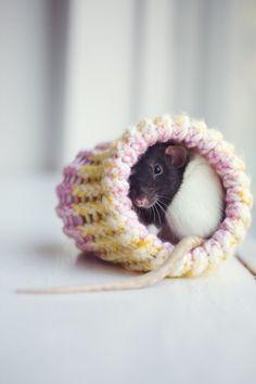 small rat bed. kr30, via Etsy.