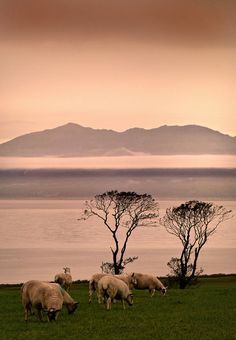 October Mist.  From Portencross Road, West Kilbride, Ayrshire, Scotland looking across the Firth of Clyde towards Arran.