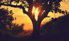 Sun Sunset Sunrise - download photo at Avopix.com for free    ➡ https://avopix.com/photo/15658-sun-sunset-sunrise    #sun #sunset #sunrise #sky #silhouette #avopix #free #photos #public #domain