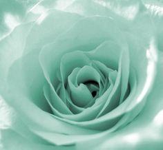 Mint green rose- my favorite color! Color Menta, Mint Color, Green Colors, Green Aqua, Coral Pink, Mint Green Aesthetic, Aesthetic Colors, Image Tumblr, Pastel Mint