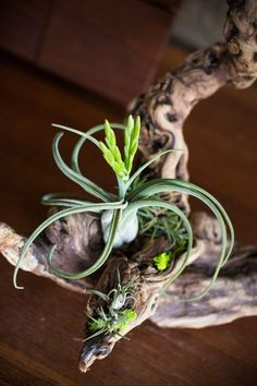 most beautiful air plants display ideas home decor ideas table decoration