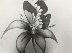 Hanafi : Butterfly on a Flower  - pencil shading