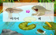 [어린이 자연관찰] 올챙이 성장과정과 개구리의 특징에 대해 알아보자(+영상) : 네이버 블로그 Dinosaur Stuffed Animal, Fish, Pets, Animals, Animales, Animaux, Pisces, Animal, Animais