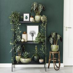 Dark green scindapsus spikkel and alocasia polly – Home Decor Apartment Living Room Green, Green Rooms, Bedroom Green, Interior Design Living Room, Living Room Decor, Dark Green Walls, New Bedroom Design, House Plants Decor, Piece A Vivre