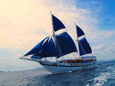 A beautiful 7 screen Pinisi. This magnificent blue & white one is the Indo Siren. Link: http://www.indosiren.liveaboards-indonesia.com/  Price indication $430 per person, per night.
