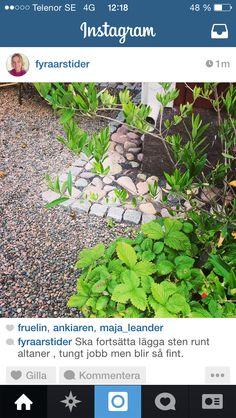 Trädgård Aquarium, Plants, Instagram, Goldfish Bowl, Fish Tank, Plant, Aquarius, Planting, Planets