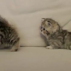 Why We Love Cats – Family Systems Theory - Cutest Baby Animals Cute Baby Cats, Kittens And Puppies, Cute Cats And Kittens, Cute Funny Animals, Cute Baby Animals, Kittens Cutest, Animals And Pets, Funny Cats, I Love Cats
