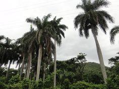 Sierra Maestra Gramna Cuba