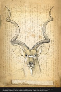 170 Greater kudu © marcello | Art | Pinterest