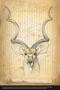 170 Greater kudu © marcello | Art | Pinterest