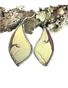 Luna Moth Butterfly Earrings - Lg