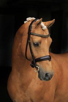 Jarnos nya ryttare Sara Aagard Hyrm börjar komma underfund med varandra och är på väg upp i toppen i Danmark. Sara hade 2 ponnyer i DM och bara en ponny får gå A finalen. Harlekin klarade sig lite bättre än Jarno och fick i år ta platsen i A finalen - Sveriges högst bedömda ridponnyföl 2015 och B...