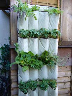 vertical gardening inspiration in shoe holder pockets