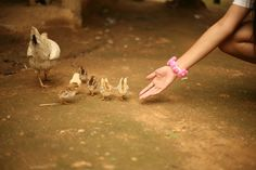 A helping hand – Volunteer with GoEco in Thailand and join the Akha Hilltribe Aid and Experience – For more information visit the project page http://www.goeco.org/project/309/Volunteer_in_Thailand_Akha_Hilltribe_Aid_and_Experience