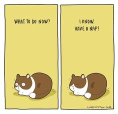 – Koty – - Belezza,animales , salud animal y mas I Love Cats, Cute Cats, Funny Cats, Adorable Kittens, Crazy Cat Lady, Crazy Cats, Cat Jokes, Cat Comics, Funny Comics