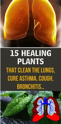 15 Healing Plants That Clean the Lungs, Cure Asthma, Cough, Bronchitis - Natural healing - Natural Asthma Remedies, Natural Cures, Natural Healing, Herbal Remedies, Healing Herbs, Holistic Healing, Natural Medicine, Herbal Medicine, Holistic Medicine