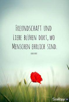 Freundschaft und Liebe