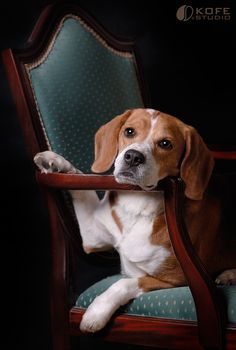 Interesting Beagle Friendly Loyal And Loving Ideas. Glorious Beagle Friendly Loyal And Loving Ideas. Cute Beagles, Cute Puppies, Cute Dogs, Dogs And Puppies, Doggies, Love My Dog, Animals And Pets, Cute Animals, Amor Animal