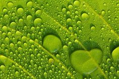 Photograph Go Green by Uda Dennie on 500px