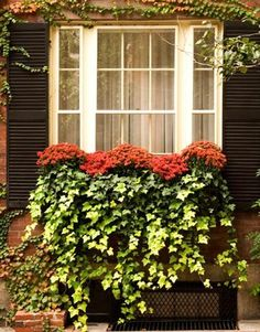 simple classic: mums & ivy done so the flowers are in pots & changed seasonally (Image via Apartment Therapy blog's Inspiring Window Box Gardens)