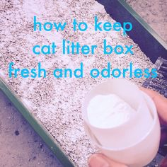 How to keep cat litter box fresh and odorless using baking soda
