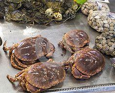 Italian crab by Leon Viti, via Dreamstime