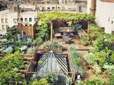 Sustainable Living Rooftop garden in Manhattan wedigfood.com will donate $1 every time you write a restaurant review to Root Capital, a nonprofit agricultural lender that grows rural prosperity in poor, environmentally vulnerable places.  #vegan, #vegetarian #sustainable #seafood