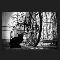 Kuro March 2015 #cat #blackandwhitephotography