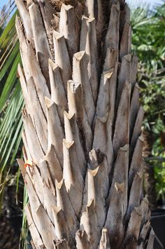 Wood, Crafts, Bamboo, Manualidades, Woodwind Instrument, Timber Wood, Trees, Handmade Crafts, Craft
