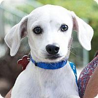 Adopt A Pet :: Jenkins - San Diego, CA