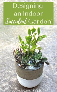 Design a simple indoor succulent garden AND see 45 succulent varieties that grow well indoors in low light! These low light succulents can thrive in the same container! #indoorsucculents #indoorsucculentgarden #indoorsucculentarrangement #indoorsucculentideas #lowlightsucculentsindoors #succulentdesign Low Light Succulents, Indoor Succulents, Succulent Arrangements, Planting Succulents, Indoor Plants, Zebra Plant, Crassula Ovata, Garden Care, Houseplants
