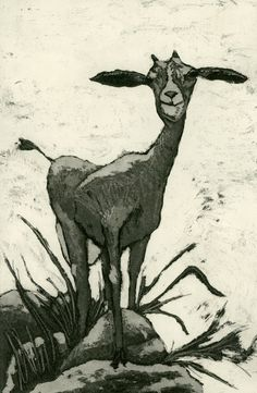 Goat art print etching of goat on rocks in by mariannjohansenellis, $45.00
