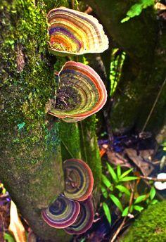 Moss, Lichen, Mushrooms