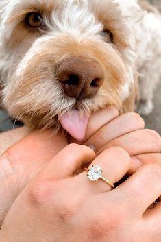 Beautiful Diamond Rings, Diamond Solitaire Rings, Oval Diamond, Diamond Jewelry, Best Engagement Rings, Rose Gold Engagement Ring, Vintage Engagement Rings, Oval Engagement, Wedding Rings Rose Gold