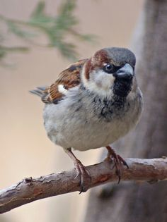 Photograph Sparrow by Cherylorraine Smith on 500px