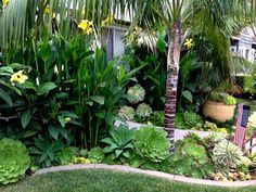 Cannas, agave, succulents and a single palm make up this tropical landscaping.