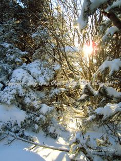 Enchanted Winter Fine Art Photography Winter by CindyELClarkPhotos