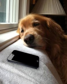 And this dog, who is still waiting on a text back: | 17 Dogs Who Are Having A Worse Day Than You
