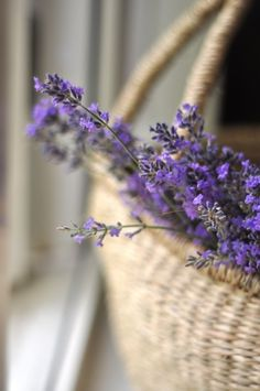 I just love lavender in a basket.I love the look of the color against the texture and neutral tone of the basket.I love the smell of lavender. Lavender Cottage, French Lavender, Lavender Blue, Lavender Fields, Lavender Flowers, Love Flowers, Purple Flowers, Beautiful Flowers, Beautiful Pictures