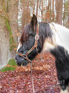 Autumn Day, Fall, Gypsy Horse, Beautiful Horses, Instagram Images, Black And White, Artwork, Animals, Autumn