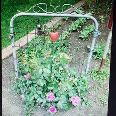 Old garden gate as a trellis