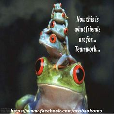 Stack of #Frogs = #Teamwork